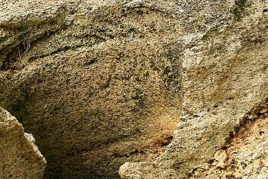 Close up of Limestone Rock