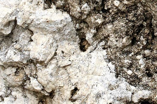 Close up of Ocala Limestone Rock