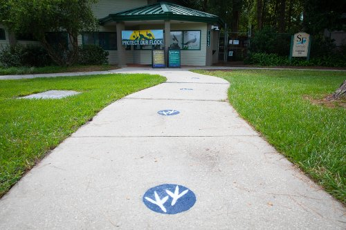 bird feet spray painted on sidewalk for social distancing, entry to zoo