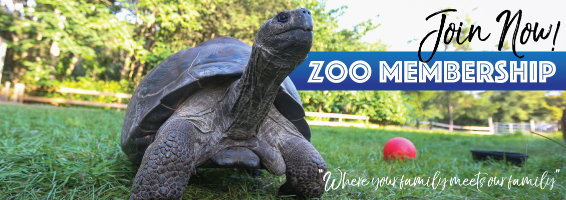 Zoo Membership. Where you family meets our family