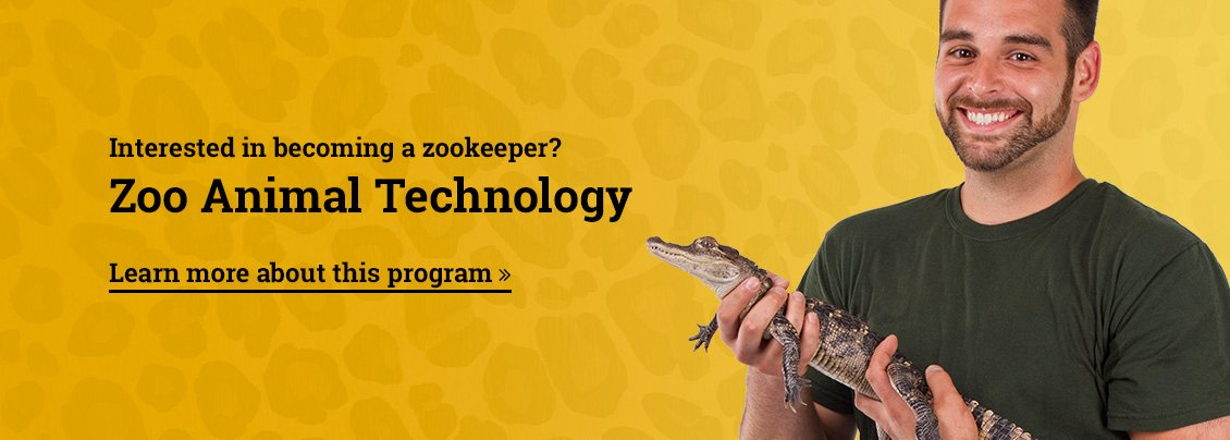 Interested in becoming a zookeeper? Learn more about Zoo Animal Technology here!