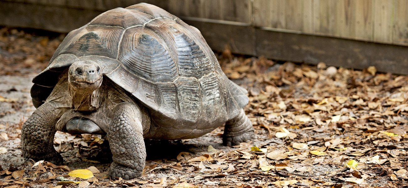 Go behind-the-scenes at the Zoo and meet giant tortoises in this one of a kind experience.